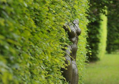 La dryade (Morel) du jardin à la Française © JF Lange, A.C.V.M