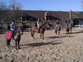 Haras-Neaufles-Equitation