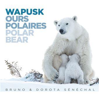 Wapusk-Ours-Polaires-Polar-Bear